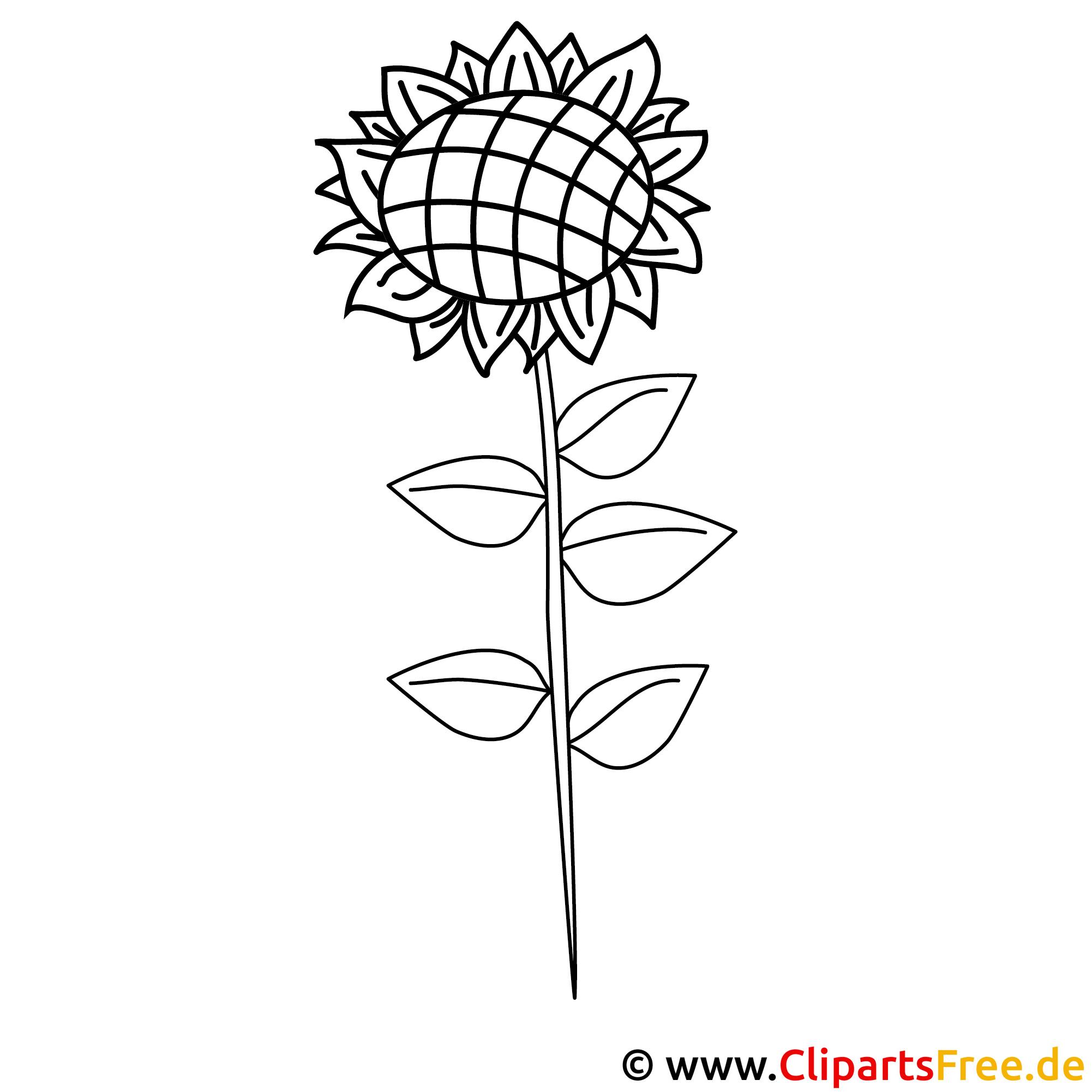Sonnenblume Bild zum Ausmalen Malvorlage