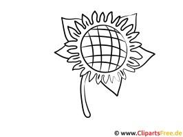 Sonnenblume Malvorlage zum Malen