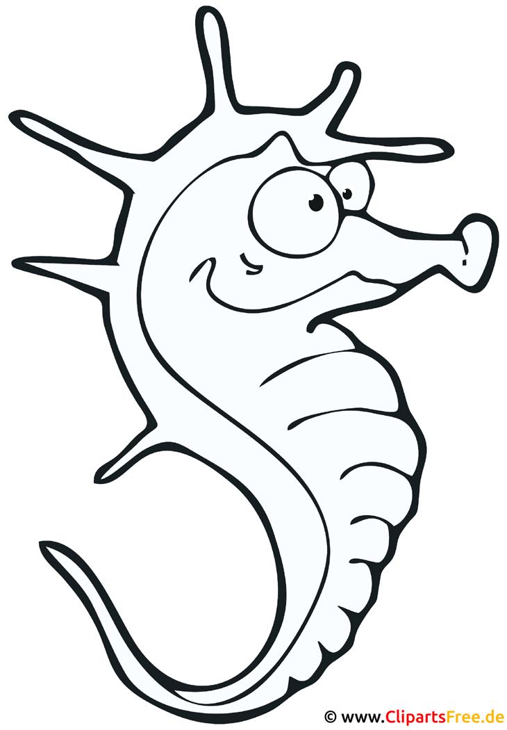 Seepferdchen Malvorlage - Zoo Malvorlagen gratis
