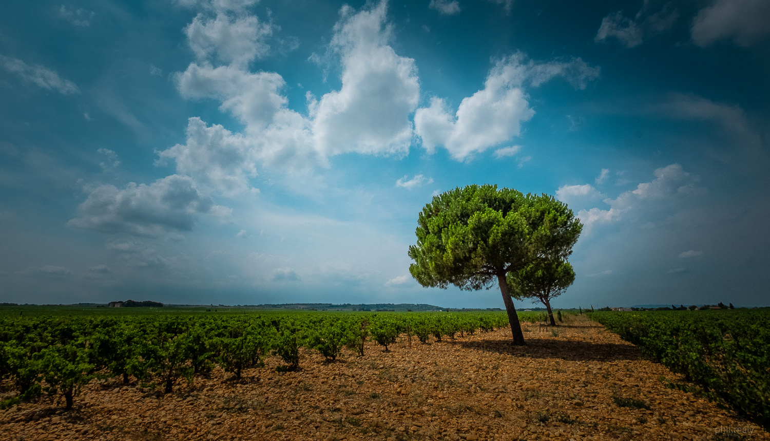 Trees and vineyards of Chateauneuf-du-Pape