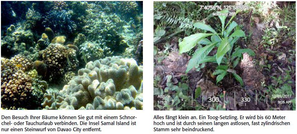 Samal Island bietet sich gut für einen Tauchurlaub an