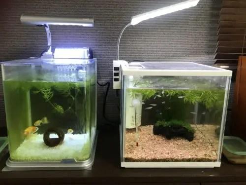 金魚とメダカの水槽