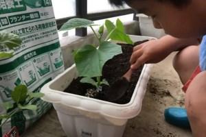 苗に植えている子ども