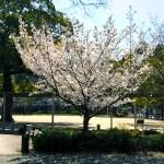 西宮の公園「六湛寺公園」