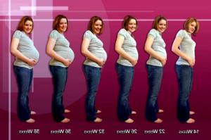 Четырнадцатая неделя беременности, определение пола ребенка