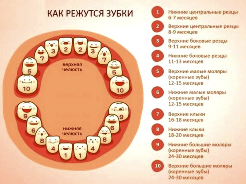a fogak és a látás gyökerei