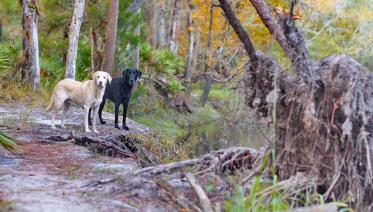 Blue & Indigo on the Econ Trail