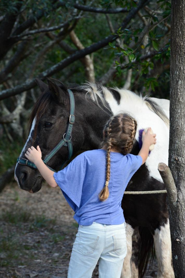 horse269-copy