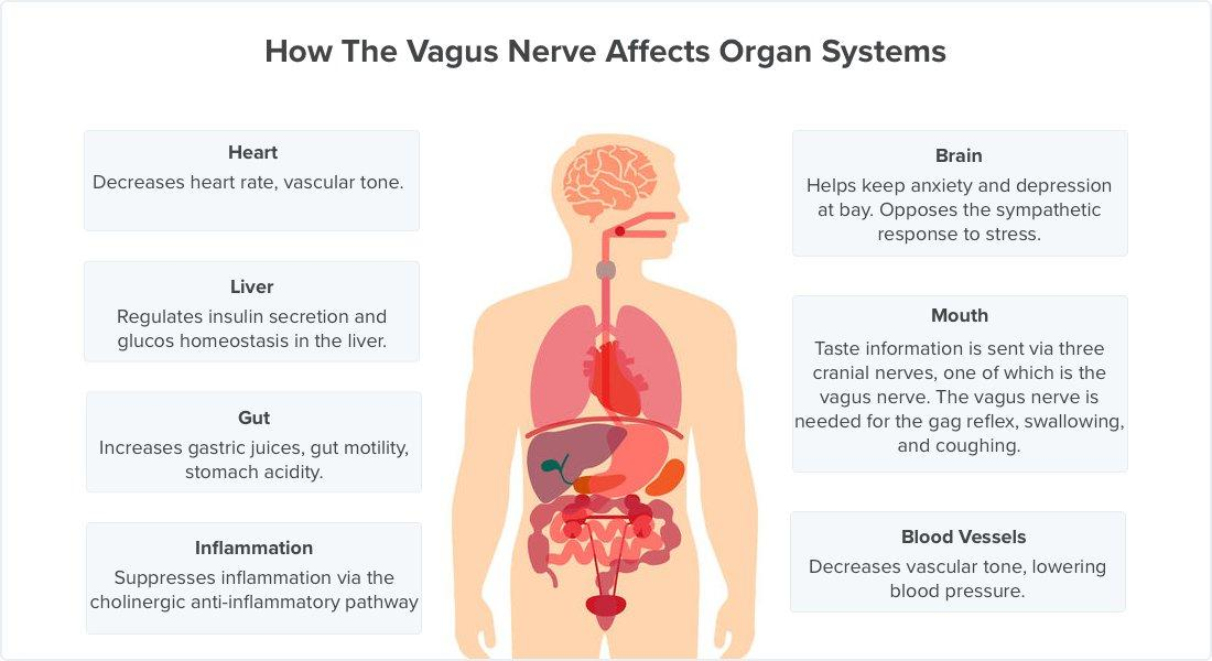6 Ways to Stimulate Your Vagus Nerve and Relieve Inflammation