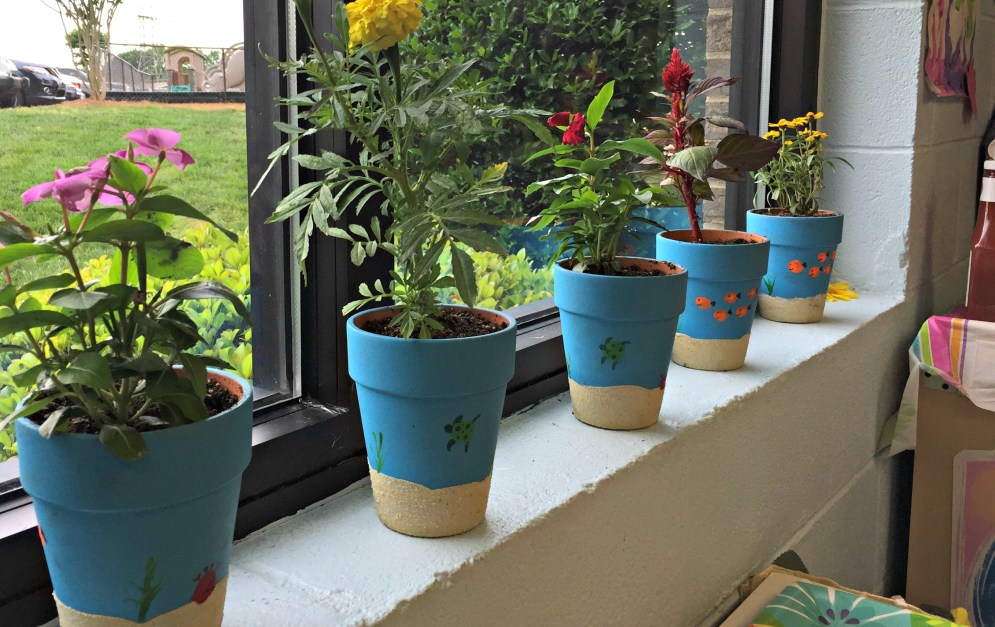 Mother's Day potted plants