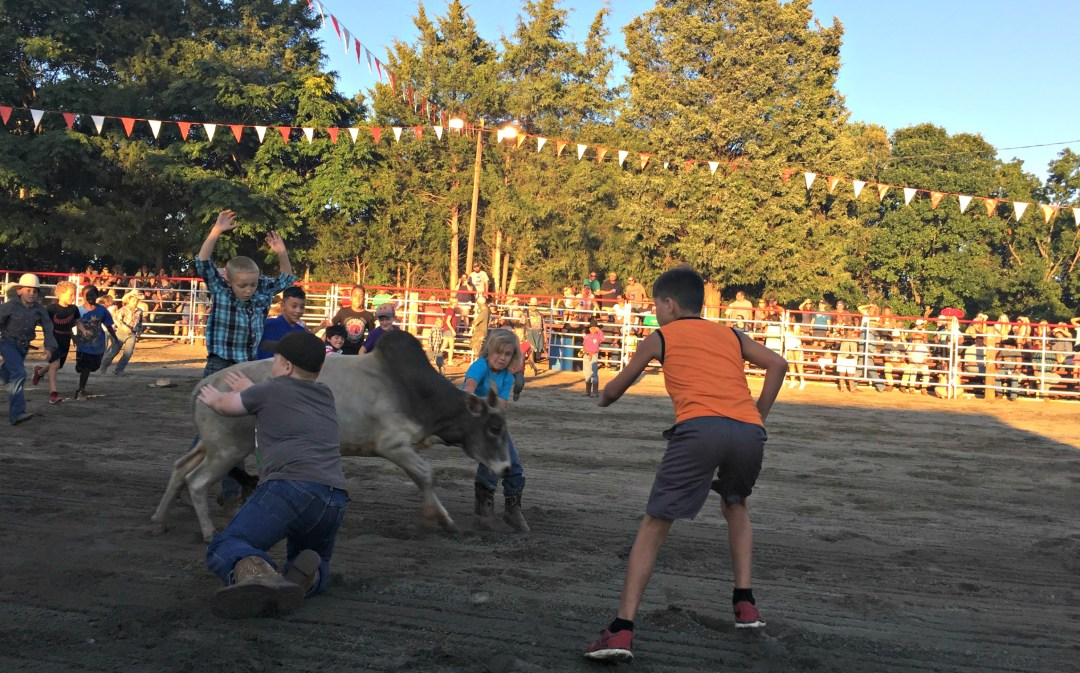 Bull chase Rodeo
