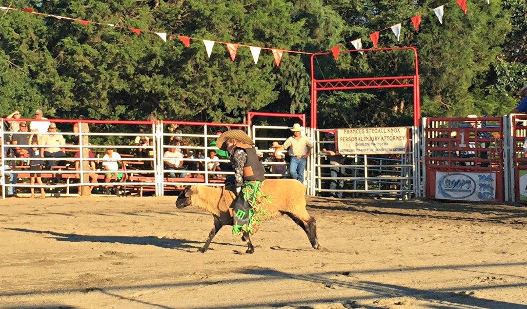 Mutton Busting Rodeo