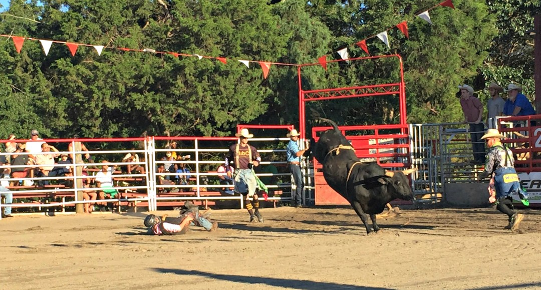 Bucked off at the rodeo