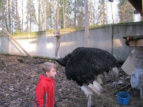 Автопутишествие  к страусам (75)