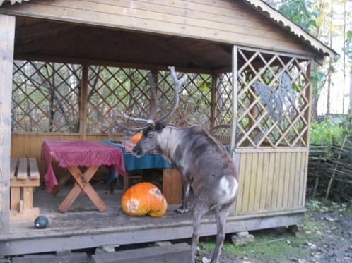 Автопутешествие МамаКлуб к страусам (78)