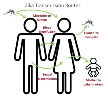 zika transmissão
