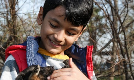 Animais de Estimação Ajudam Crianças