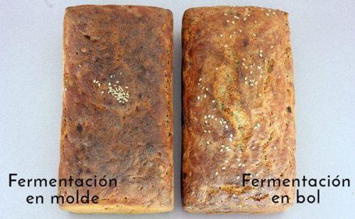 ¿Debe fermentar la masa en su forma final? panes sin gluten panes enteros