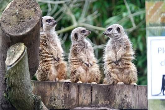 Zoo - Thomas Land at Drayton Manor