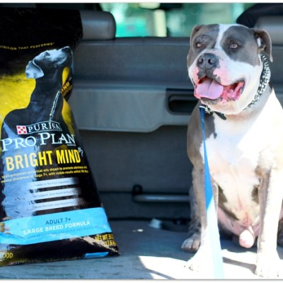 Making Every Day a Bright Day with Purina Pro Plan Bright Mind dog food