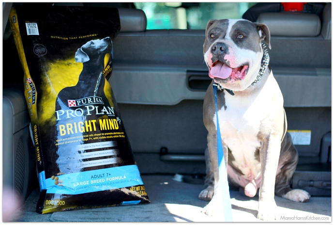 Making Every Day a Bright Day with Purina Pro Plan #BrightMind dog food (ad) | Mama Harris' Kitchen