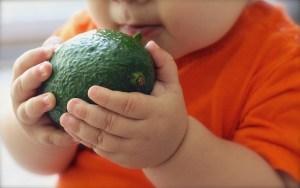 avocado-1476493_640