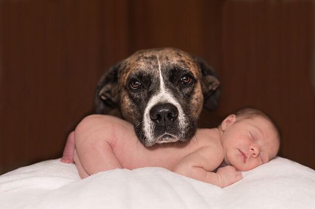 犬と赤ちゃんが同居?一緒に生活する上で注意したい8つのこと