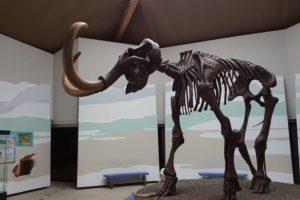 das-siegsdorfer-mammut