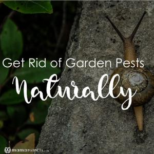 How to Get Rid of Garden Pests Naturally