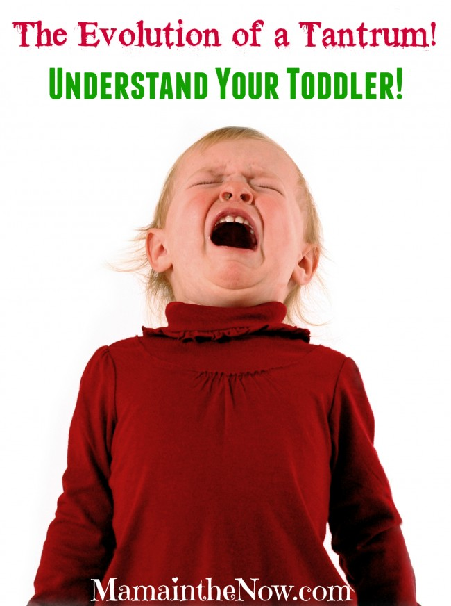 The Evolution of a Tantrum! Understand Your Toddler!