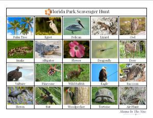 Florida scavenger hunt, Florida wildlife bingo. Great activity for kids to learn and enjoy Florida National Parks.