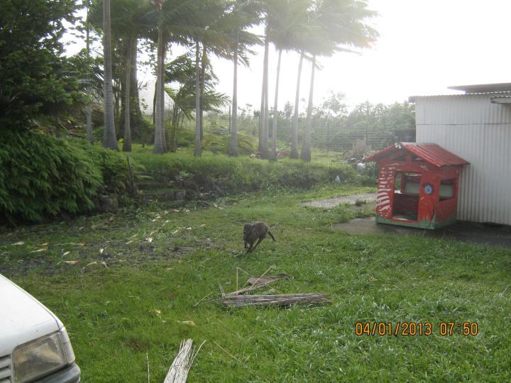 Cyclone Dumile 016