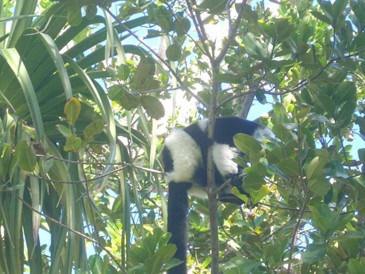 Madagascar 177