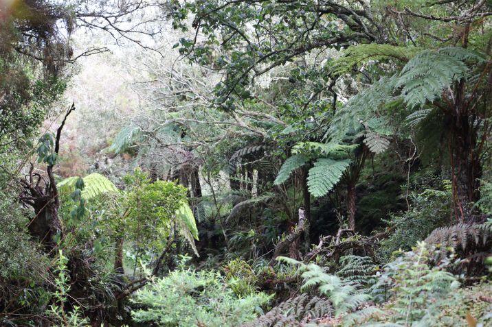 Forêt Avril 6