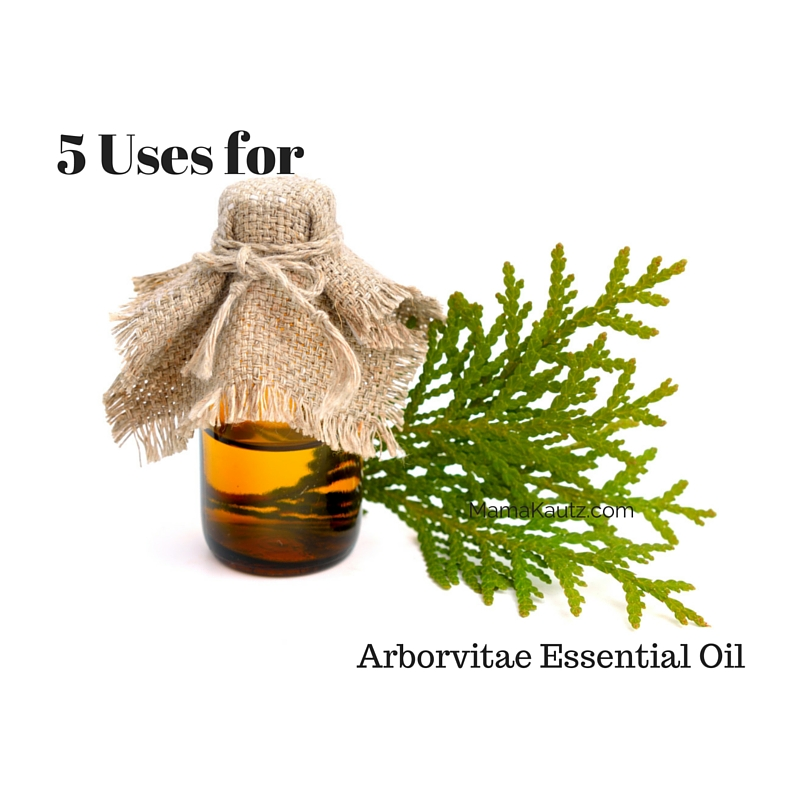 5 Uses for Arborvitae Essential Oil