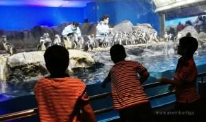Apa Yang Menarik di Underwater World Langkawi? Haa Meh Nak Cerita…