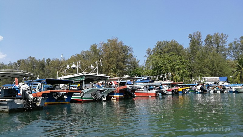 Langkawi Mangrove Tour review