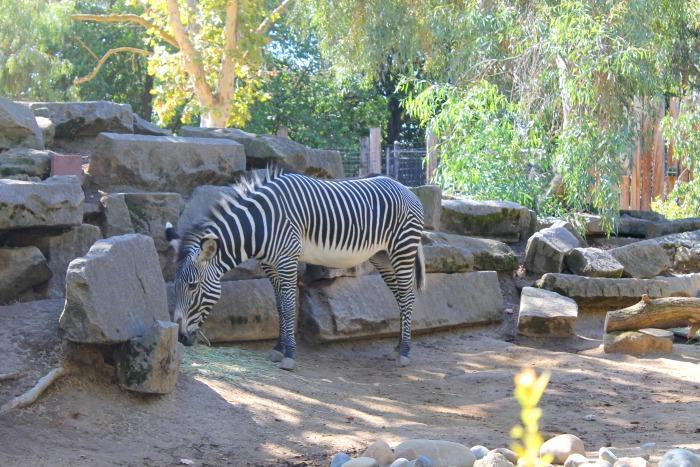 Family Fun At The Sacramento Zoo  Mama Knows It All