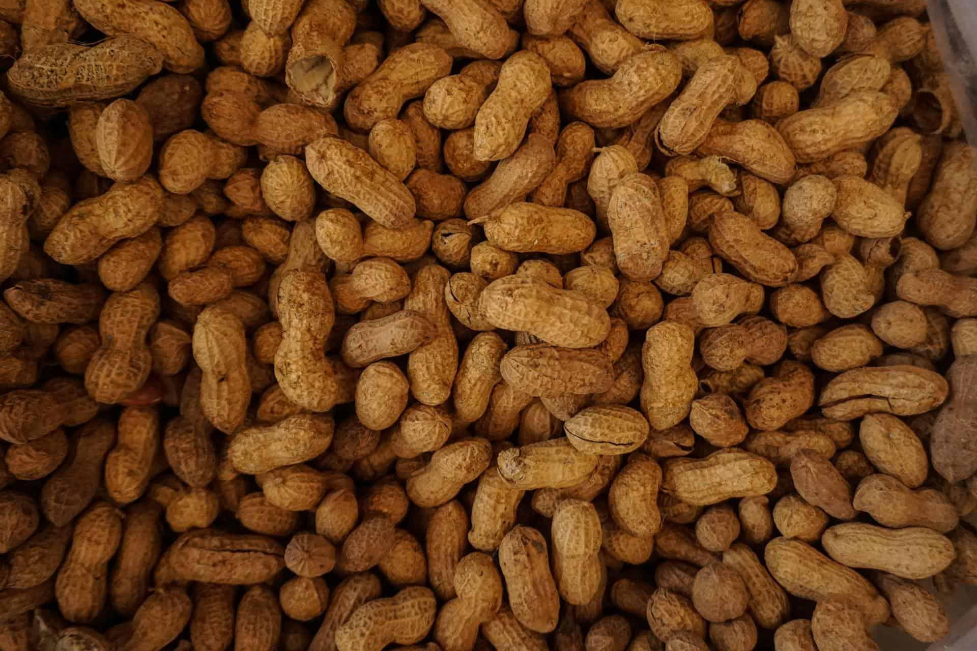 Introducing Allergenic Foods