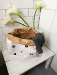 Roomtour: So lebe ich. Gäste- WC
