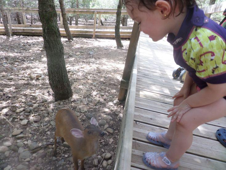 Vicky en el safari fotográfico.