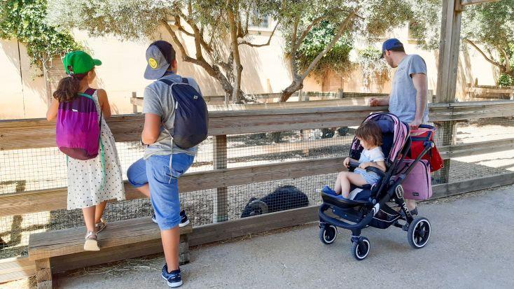 Los niños en la granja. Actividades para peques.