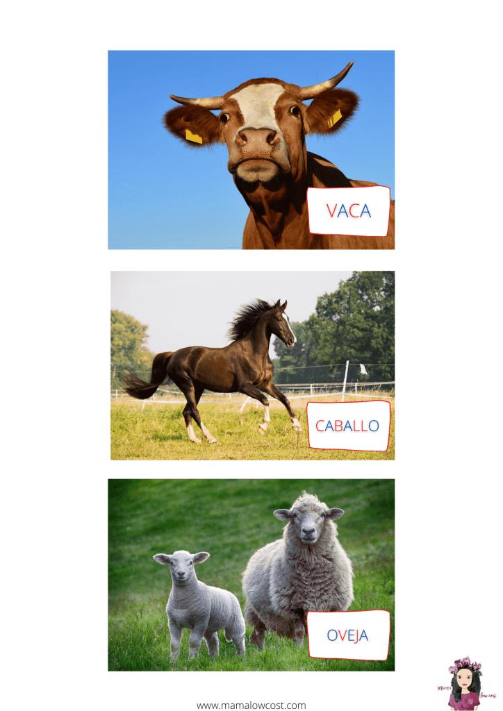 Clasificar animales