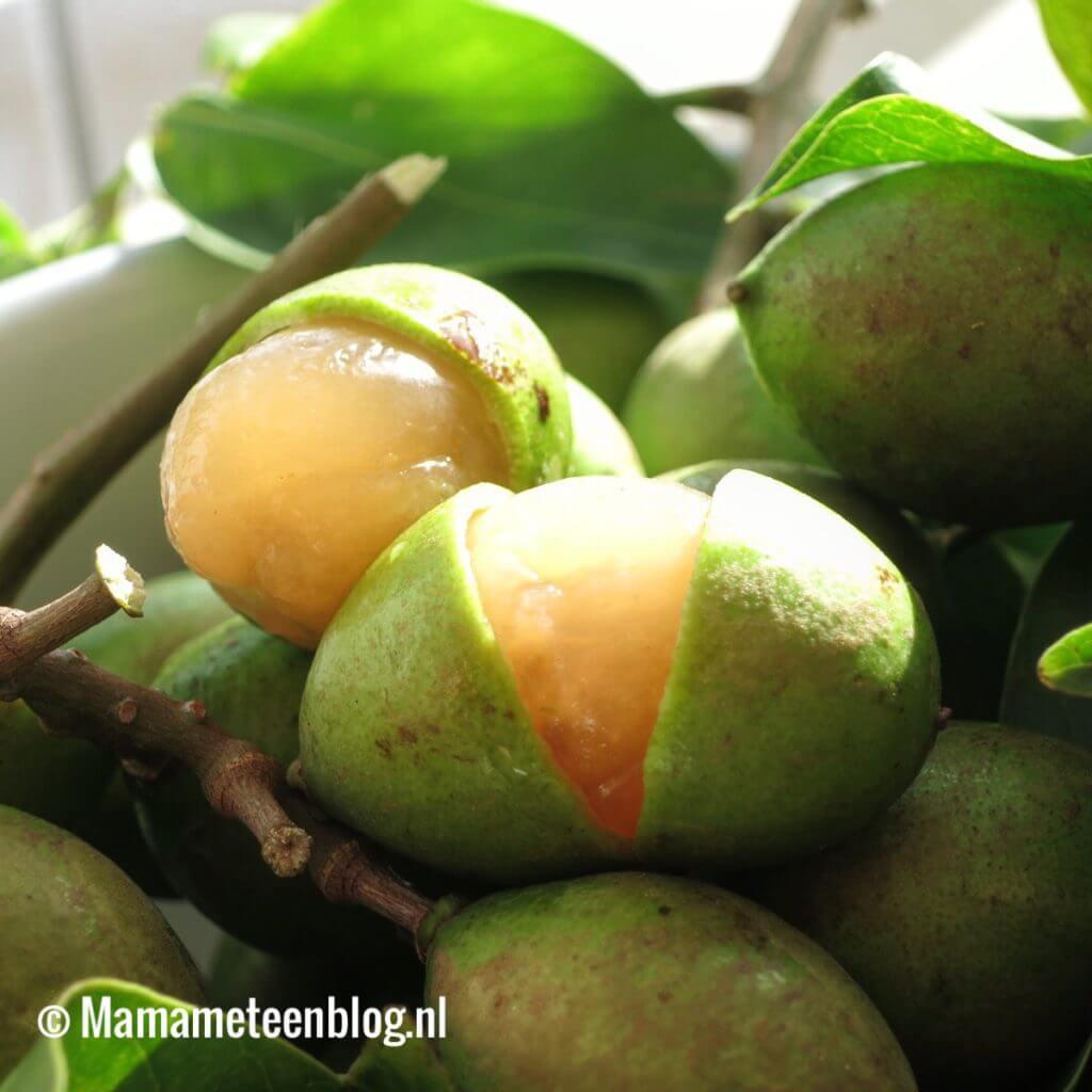 Family B Goes Suriname week 2 Mamameteenblog.nl Knippaas