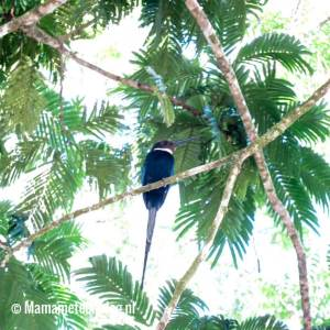 Family B Goes Suriname week 2 Mamameteenblog.nl ColaKreek