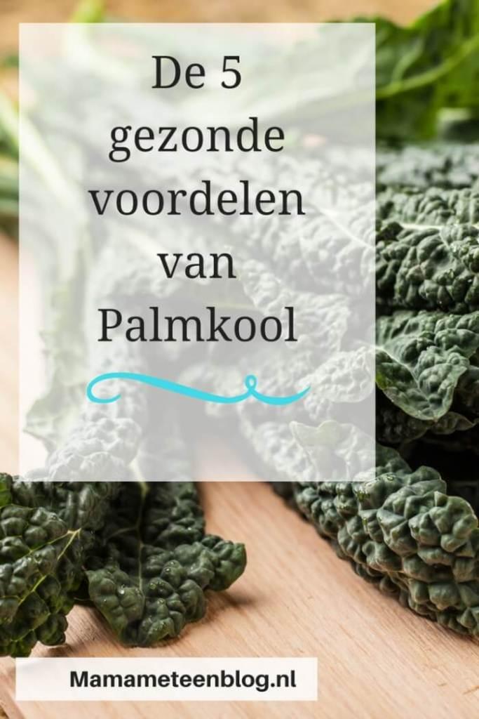 De 5 gezonde voordelen van palmkool mamameteenblog