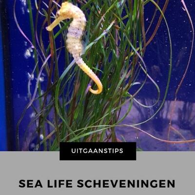 Uitgaanstip Sea life scheveningen mamameteenblog.nl