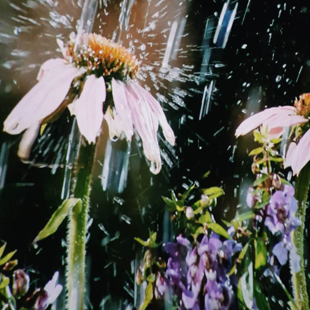 backyard wilderness bloem Mamameteenblog