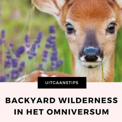 BACKYARD WILDERNESS MAMAMETEENBLOG.NL