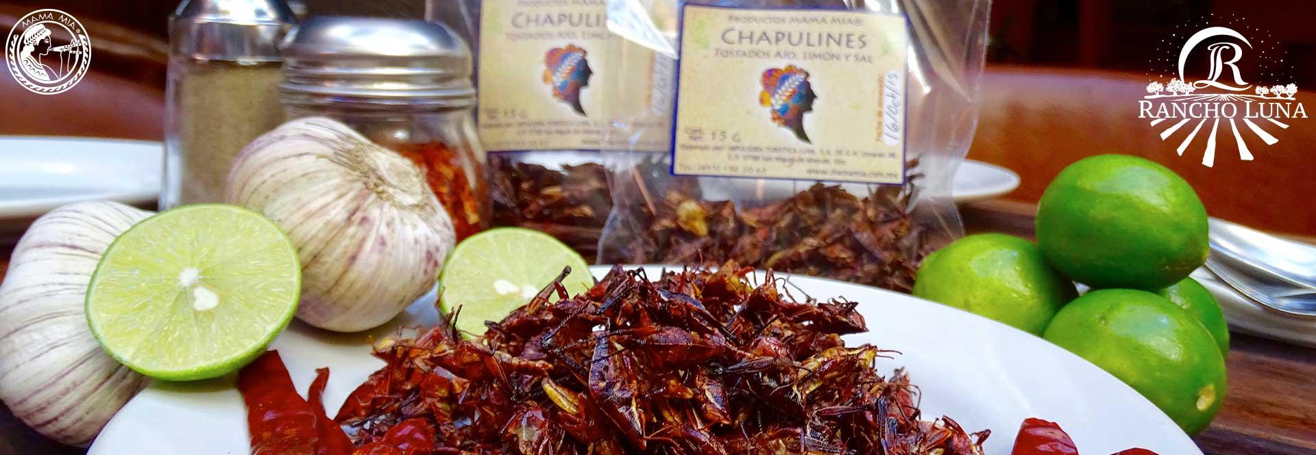 Chapulines MAMA MIA San Miguel de Allende